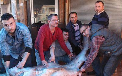 Mersinde balıkçıların ağına dev köpek balığı takıldı